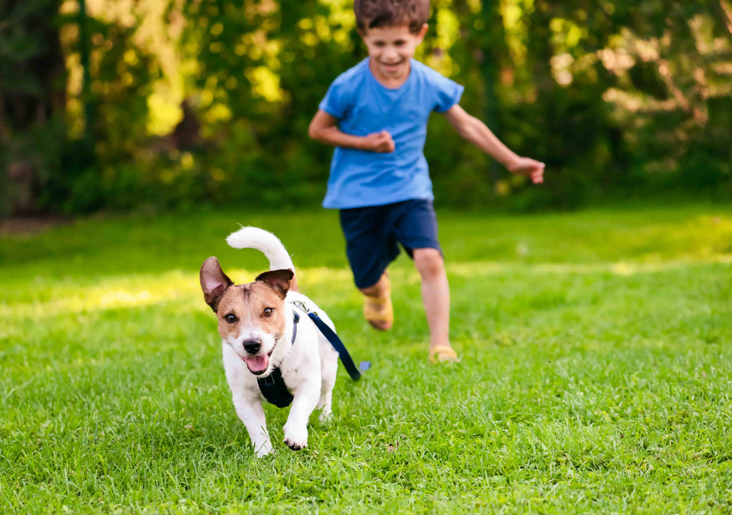 Boy running after his dog